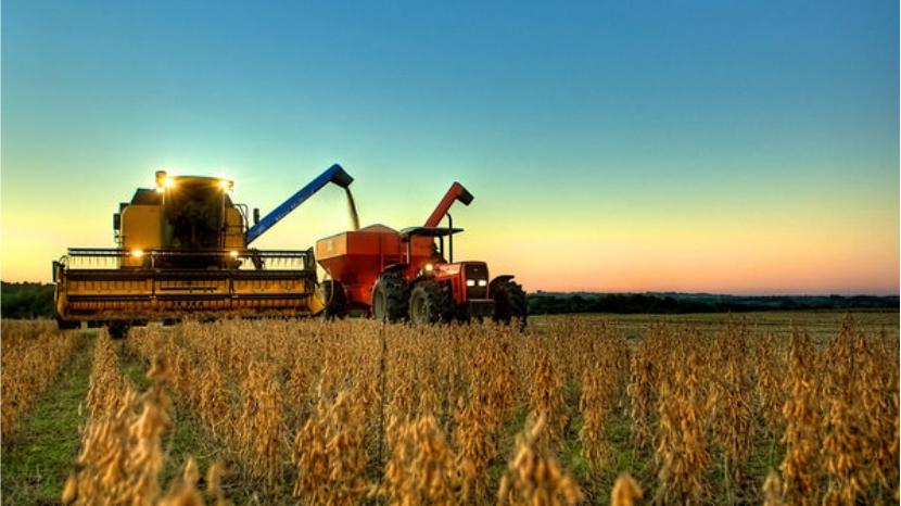 Conab estima produção de soja em 81,53 milhões de toneladas