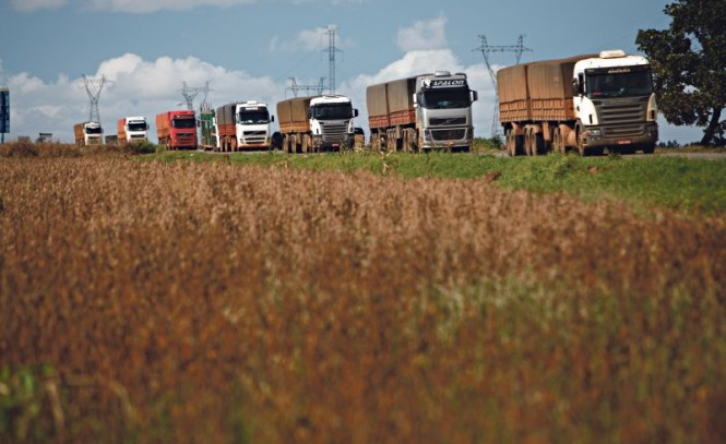Brasil deve colher uma supersafra com mais de 204 milhões de toneladas