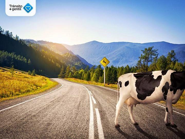 Promotor pede medidas para evitar acidentes com animais em rodovias