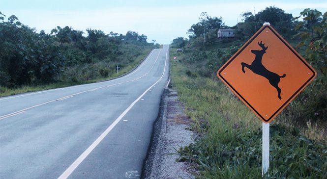 Diminui número de animais atropelados nas rodovias concedidas em São Paulo