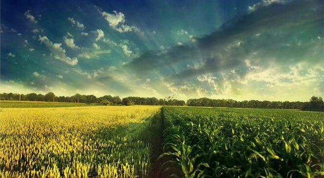 Agricultura caminha para um ano de recordes. E a gente vai pegar carona nisso.
