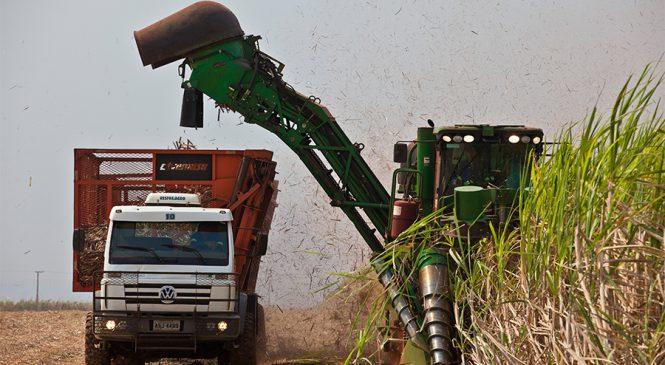 Produtores adiam colheita da cana-de-açúcar na tentativa de aumentar a produtividade