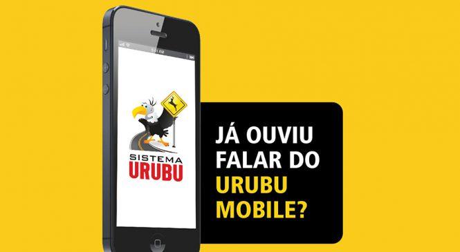 App ajuda na prevenção de acidentes em rodovias envolvendo animais silvestres