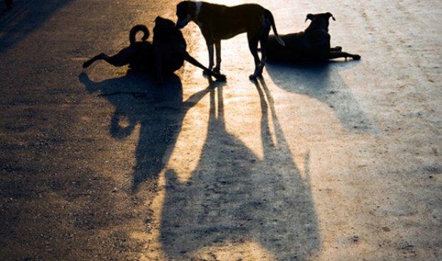 Concessionária apoia campanha contra abandono de animais na rodovia