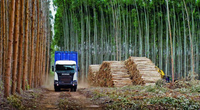 Scania leva à Expoforest as melhores soluções de transporte para o segmento madeireiro