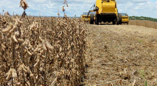 Pela sexta safra consecutiva, Mato Grosso do Sul quebra recorde de produção de soja