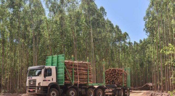 Volkswagen reforça oferta para o setor florestal