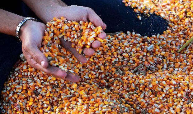 Nova rota reduzirá tempo e custos com o frete para chegada de milho a Santa Catarina