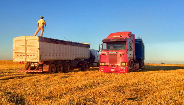 Safra de trigo pode ser a melhor dos últimos três anos