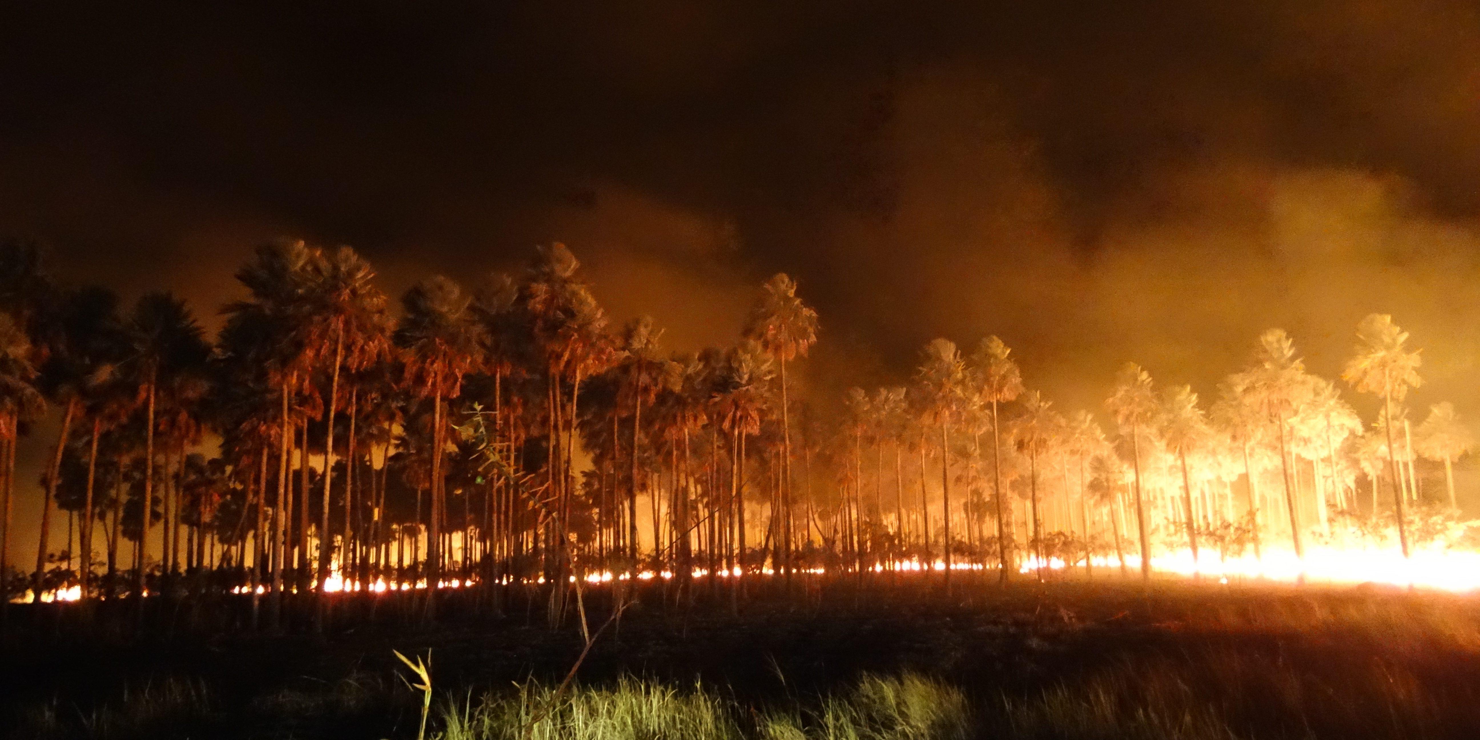 Chico da Boleia envia mensagem aos trabalhadores do setor a respeito das queimadas