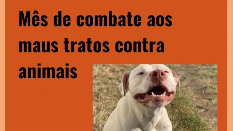 Abril Laranja: mês de combate aos maus tratos contra animais