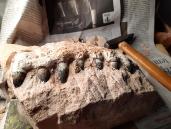 Eixo SP localiza fósseis de dinossauros em obras na SP 294